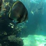 Foto de Aquarium des Lagons Nouvelle Caledonie