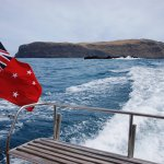 A fascinating cruise circumventing Akaroa harbour and out into the ocean