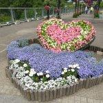 Photo of Tottori Hanakairo Flower Park