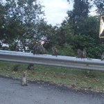 D'Coconut Hill Resort Photo