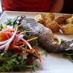 Rainbow trout, Bella Italia Sun Peaks