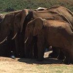 Photo de Parc national des Éléphants d'Addo