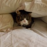 Pet friendly. My kitty hid in the pillows when I stepped out for ice her was so scared.