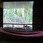 Hammock by the window