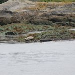 Seals on the whale watching tour