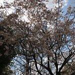 Photo de Parc du château d'Osaka