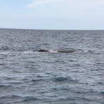 Photo de Whale Watch