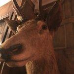 Rudolph...!