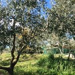 Agriturismo Castrum Normanno Image
