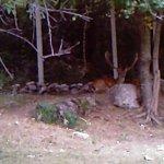 animali in liberta ambiente vicinori