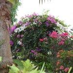 Photo of Villa Rose Caraibes