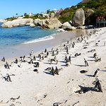 Photo of Boulders Penguin Colony