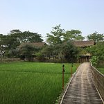 Rooms are on the periphery of the paddy fields