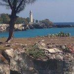 Photo of Coral Seas Garden