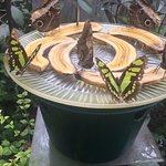 Feeding station to attract butterflies