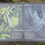 Photo of Lava Tree State Park