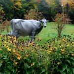 Granite Cow