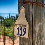 Salerno Winery Petite Sirah Vineyards