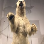 The Charleston Polar Bear