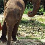 Patara Elephant Farm - Private Tours Foto