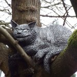 Cheshire Cat in an old mulberry tree
