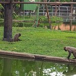 Foto de CIGS Zoo