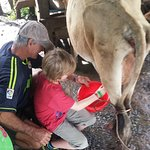 Milking the cow for our queso!