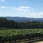 Overlooking the vines & the Balhannah area