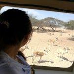 Amazing Safari