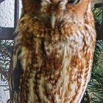 Owlamo at Reelfoot Lake Visitor's Center