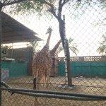 Photo of Dubai Zoo