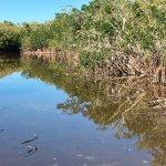quiet lagoon