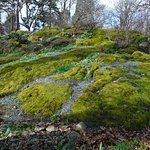 JUICY GREEN HILLS OF MOSS