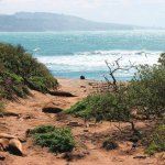 The path to the beach, strewn with seal pups