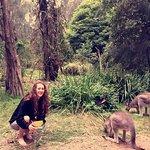 Wake up with kangaroos
