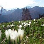 Photo of Haus Alpengruss