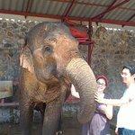 Feeding and bathing the elephants