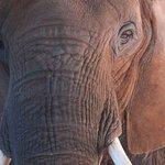 Chrissy the Elephant