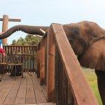 Breakfast with Elephants!