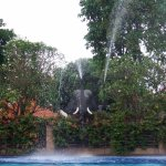 One of the pool elephants in action...