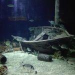 Vista interior de los acuarios