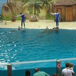 The dolphins during the show
