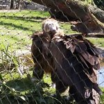 Foto di Burgers' Zoo and Safaripark