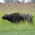 Photo of Savute Reserve