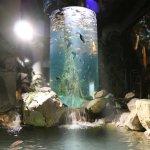 Freshwater Journey