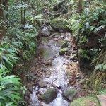 Tour of Diamond Botanical Gardens