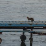 View of the cats waiting for the fishermen to return.