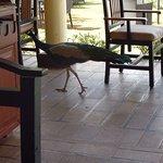 open dining patio