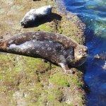 Watching seals near Inn