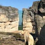 Photo of Zoo am Meer